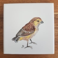 Forty Spotted Pardalote Ceramic Tile Coaster