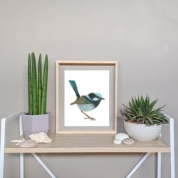 FINN – Superb Fairy Wren Art Print