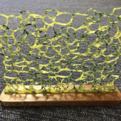Coral Dreaming Earring Holder