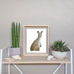 KALI – Kangaroo Art Print