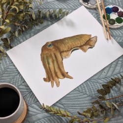CAREY – Cuttlefish Art Print