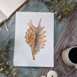 CHLOE – Conch Seashell Art Print