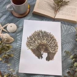 ERIN – Echidna Art Print