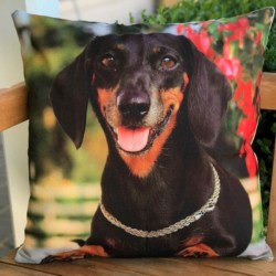 Cushion. Dachshund silver collar