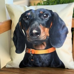 Cushion. Dachshund brown collar