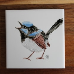 Singing Superb Fairywren Ceramic Tile Coaster