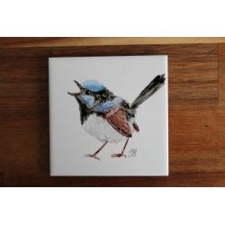 Singing Superb Fairywren Ceramic Tile Coaster