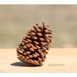10 medium Pine Cones for arts and crafts, wedding, Christmas, pinecones