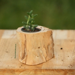 Handcrafted Natural organic succulent log planter with succulent included