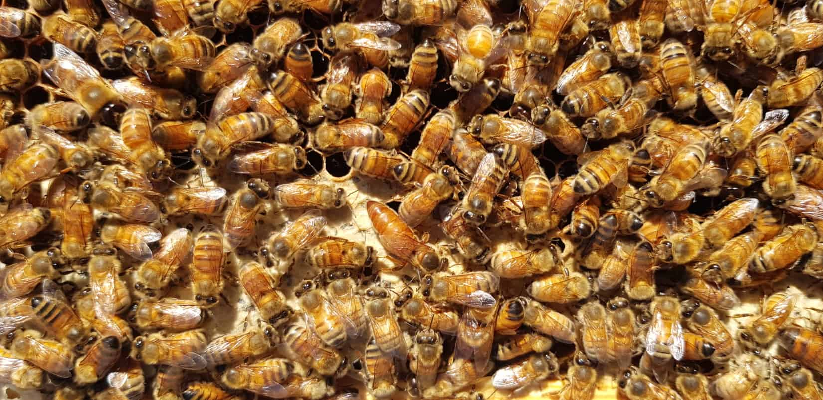 Australian Bee Products