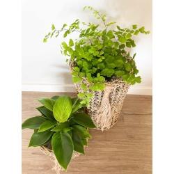 Ivy Basket – Set of 2