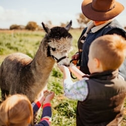 Alpaca Meet & Greet Experience