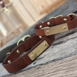 Australian leather dog collars with solid brass name plate