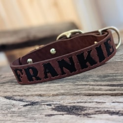 Australian leather traditional dog collars