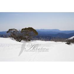Mount Hotham Views | Canvas or Framed Artwork | Australian Photography